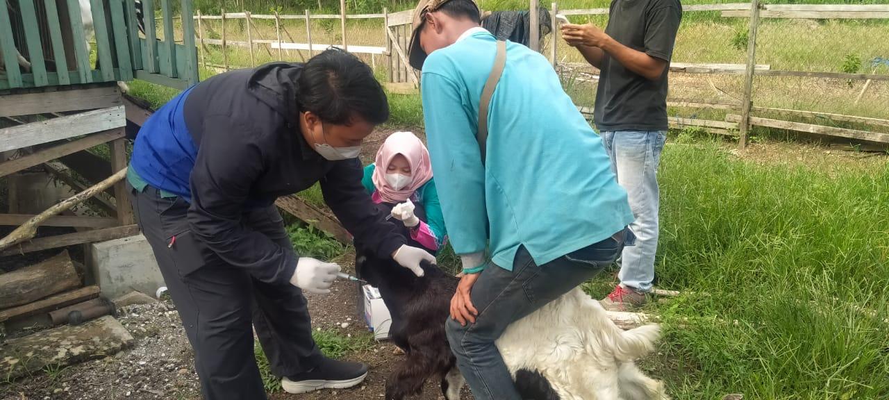 Disbunnak KalSel Siap Melaksanakan Pengawalan Dan Pemeriksaan Hewan Kurban Di Kalimantan Selatan